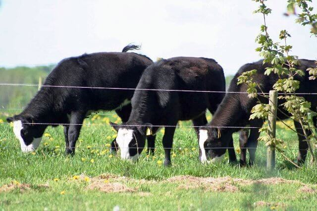 wichers-farm (2)